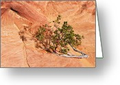 Vine Photo Greeting Cards - I am the Vine Greeting Card by Mike  Dawson