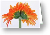 Fine Art Flower Photography Greeting Cards - I Cannot Live Without You  Greeting Card by Juergen Roth