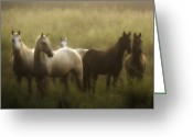 Ron Mcginnis Photography Greeting Cards - I Dreamed of Horses Greeting Card by Ron  McGinnis