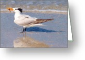Tern Greeting Cards - I Got It Greeting Card by E Luiza Picciano