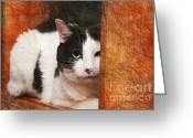 Short Hair Greeting Cards - I Have My Eye On You Greeting Card by Andee Photography