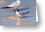 Tern Greeting Cards - I know She Watches Me Greeting Card by E Luiza Picciano