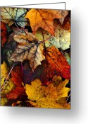 Red Maple Greeting Cards - I Love Fall 2 Greeting Card by Joanne Coyle