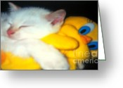 Playful Kitten Greeting Cards - I Love You Tweety Greeting Card by Melissa