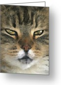 Calico Cat Greeting Cards - I Miss Him Sometimes ... Greeting Card by Gwyn Newcombe