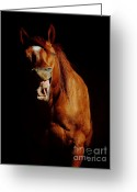 Quarter Horse Photo Greeting Cards - I Said HAY Not HEY Greeting Card by Robert Frederick