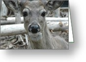 Rudolph Greeting Cards - I see you But I Blend Greeting Card by LeeAnn McLaneGoetz McLaneGoetzStudioLLCcom