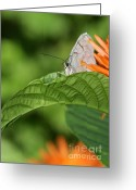 Gossamer Greeting Cards - I See You Greeting Card by Sabrina L Ryan