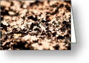Lichen Image Greeting Cards - I Shall Imagine Life Greeting Card by Venura Herath