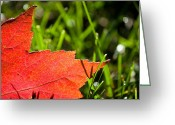 Warmth Greeting Cards - I Wish You Could Stay A While Longer Greeting Card by Daniel Chen