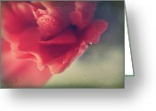 Pink Carnations Greeting Cards - I Wonder If You Ever Miss Me Greeting Card by Laurie Search