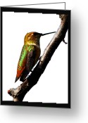 Shamanic Photo Greeting Cards - Iaido Hummingbird Greeting Card by Susanne Still