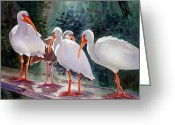 Backlit Painting Greeting Cards - Ibis - Youngster Among Us. Greeting Card by Roxanne Tobaison