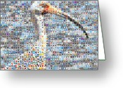 Grid Of Heart Photos Digital Art Greeting Cards - Ibis Greeting Card by Boy Sees Hearts