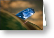Automobile Hood Greeting Cards - Ice Blue Greeting Card by Kurt Golgart