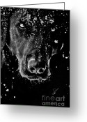 Intent Greeting Cards - Ice Dog Greeting Card by Susan Yates