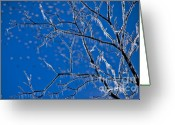 Winter Storm Greeting Cards - Ice Tree Greeting Card by Susan Yates