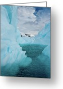 Antarctica Greeting Cards - Iceberg Lagoon Greeting Card by Duane Miller