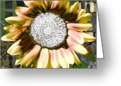 Oatmeal Greeting Cards - Iced Oatmeal Cookie Sunflower Greeting Card by Devalyn Marshall