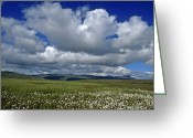 Cumulus Cloud Greeting Cards - Iceland Cumulus Louds Over Green Greeting Card by Keenpress