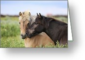 Two Animals Greeting Cards - Icelandic Horse Greeting Card by Gigja Einarsdottir