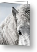 Livestock Greeting Cards - Icelandic Horse, Greeting Card by Vilhjalmur Ingi Vilhjalmsson