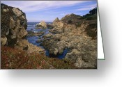 California And Hawaii Greeting Cards - Iceplant Growing On Cliffs At Rocky Greeting Card by Tim Fitzharris