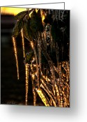 Christopher Holmes Greeting Cards - Icicles Of Gold Greeting Card by Christopher Holmes