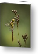 Compound Greeting Cards - Icon of Summer Greeting Card by Andy Astbury