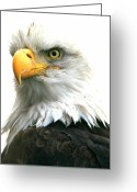 Eagle Prints Greeting Cards - Iconic Greeting Card by Carrie OBrien Sibley