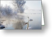 Two Animals Greeting Cards - Icy Swan Lake Greeting Card by E.M. van Nuil
