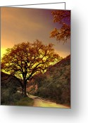 Oak Tree Greeting Cards - If You Dare Dream Greeting Card by Laurie Search