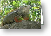 N Taylor Greeting Cards - Iguana Daze Greeting Card by N Taylor