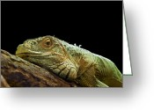Green Monster Greeting Cards - Iguana Greeting Card by Jane Rix