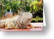 Iguana Greeting Cards - Iguana Greeting Card by Showing the world ..