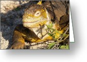 Iguana Greeting Cards - Iguana Smile Greeting Card by Richard Mansfield