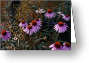 Cone Flower Greeting Cards - Ill Have The Purple Ones Greeting Card by Ross Powell