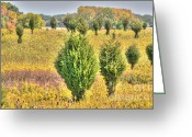 Suburbs Greeting Cards - Illinois Autumn Yellows Greeting Card by Deborah Smolinske