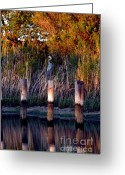 Clayton Photo Greeting Cards - Illusion Greeting Card by Clayton Bruster