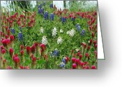 Robyn Stacey Photo Greeting Cards - Illusions of Texas in Red White Blue Greeting Card by Robyn Stacey