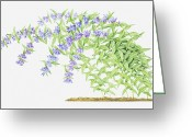 Color Bending Greeting Cards - Illustration Of Gentiana Asclepiadea (willow Gentian), Purple Flowers On Long, Bending Stems Greeting Card by Helen Senior