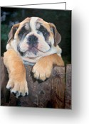 Funny Pet Picture Greeting Cards - Im Bored.  Greeting Card by Martin  Fry