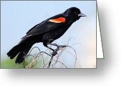 Chevalier Greeting Cards - Im like a bird Greeting Card by Elizabeth Chevalier