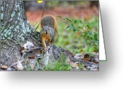 Squirrel Photographs Greeting Cards - Im Watching You Greeting Card by Ester  Rogers