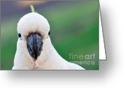 Black Beak Greeting Cards - Im Watching YOU Greeting Card by Kaye Menner