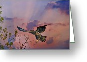 Reelfoot Lake Digital Art Greeting Cards - Immature Bald Eagle Breaks Limb Greeting Card by J Larry Walker