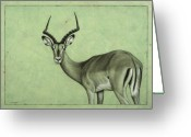 Wildlife Drawings Greeting Cards - Impala Greeting Card by James W Johnson