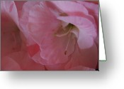 Impatiens Flowers Greeting Cards - Impatiens Beauty Greeting Card by Nancy TeWinkel Lauren