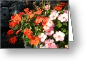 Impatiens Flowers Greeting Cards - Impatient For Impatiens Greeting Card by Warren Thompson