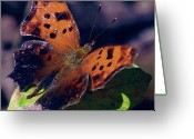 Lake Park Greeting Cards - Imperfect Satyr Comma Greeting Card by DigiArt Diaries by Vicky Browning